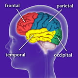 Epilepsy Syndromes and the areas of the brain they effect.