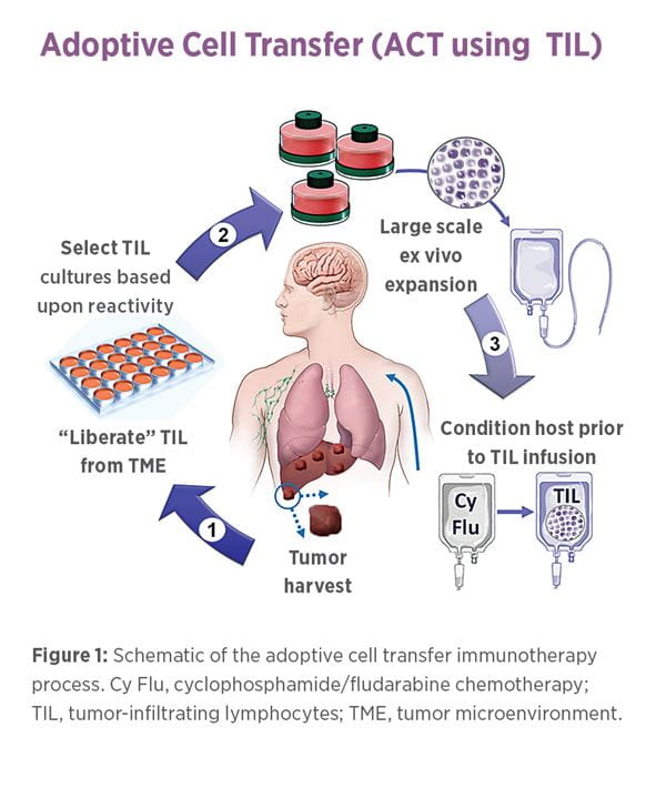 Adoptive Cell Transfer graphic