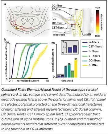 Combined Finite Element/Neural Model of the macaque cervical spinal cord