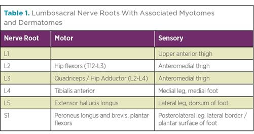 Table depicting Lumbosacral Nerve Roots With Associated Myotomes and Dermatomes