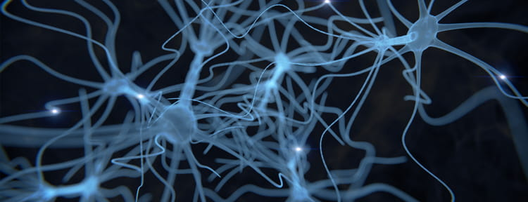 UPMC Physician Resources Image of Brain Neurons
